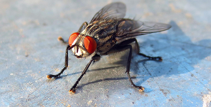 Инсектицидные средства